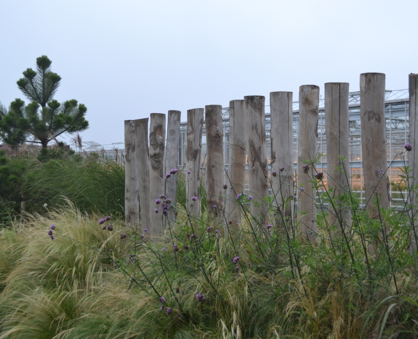 vanDaalen buiten tuinontwerp duintuin 1 's-Gravenzande siergrassen kastanjehout stipa verbena